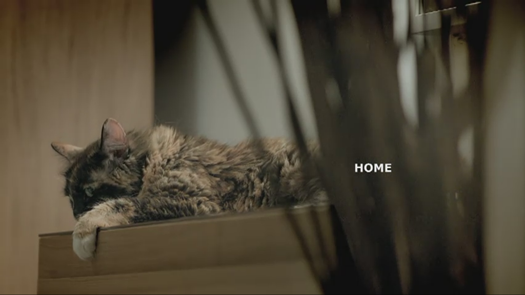 ikea releases 100 cats into store